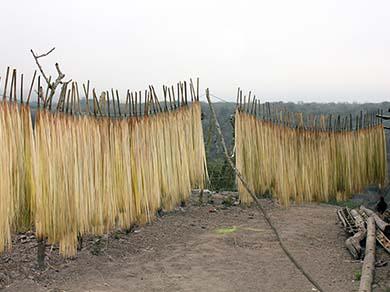 Sun Drying Toquilla Straw